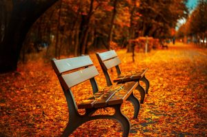 Fall Leafs on bench