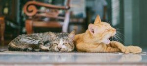 Cats napping