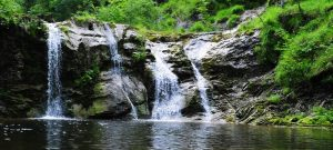 Bear creek in Lakewood
